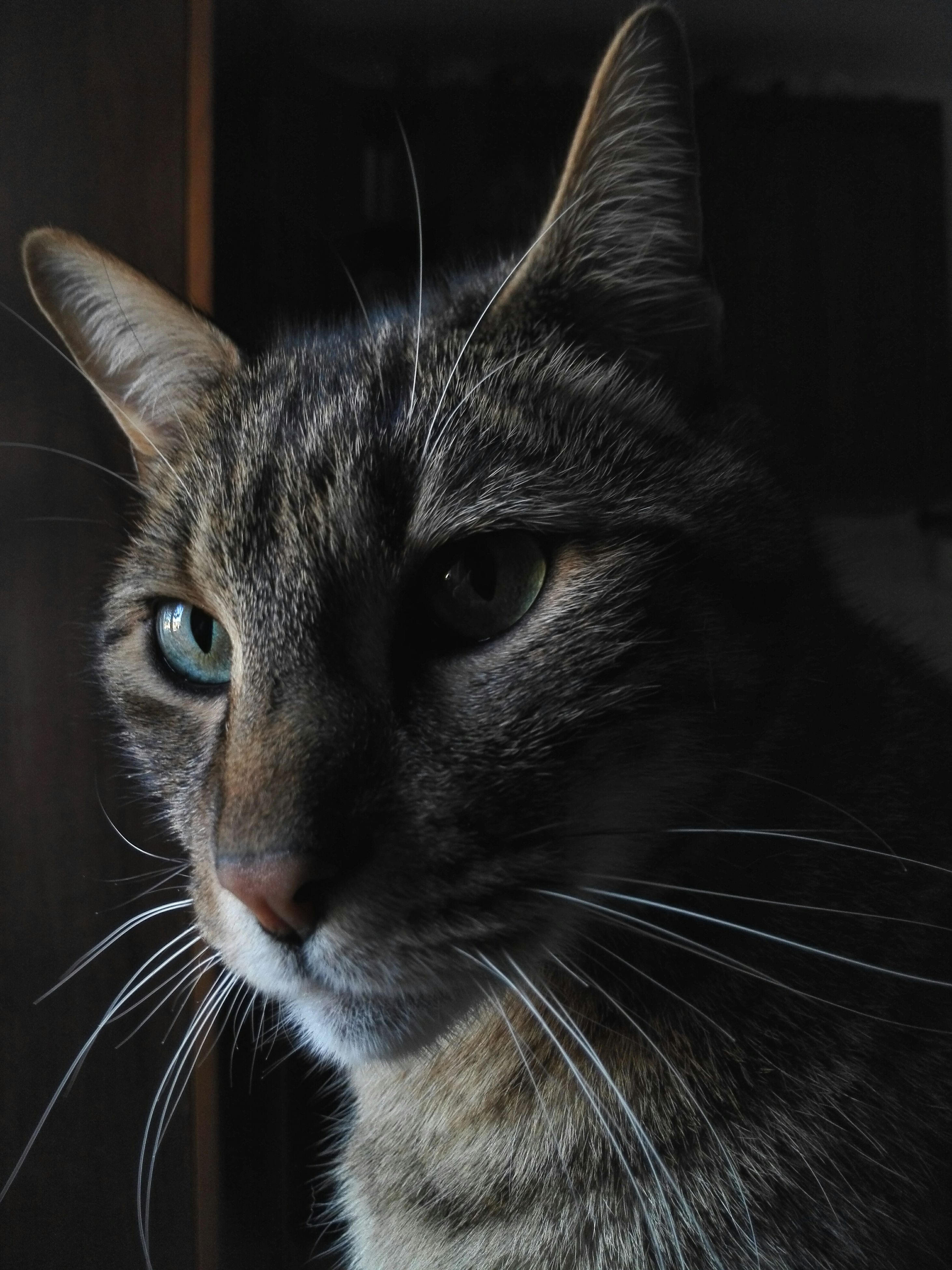 one animal, pets, domestic cat, domestic animals, animal themes, cat, indoors, whisker, mammal, feline, close-up, animal head, portrait, looking at camera, animal eye, focus on foreground, alertness, animal body part, no people