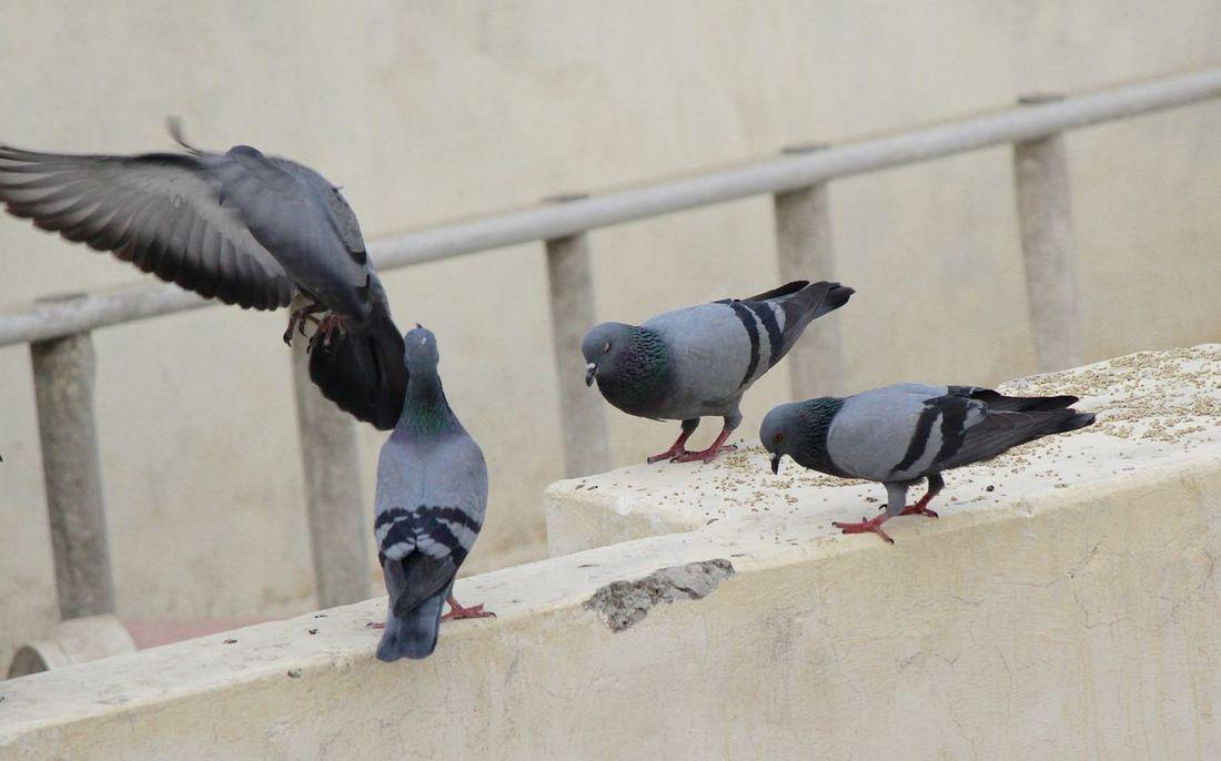 Animal Wing Bird Feeding  Flapping Flying Perching Spread Wings Wildlife
