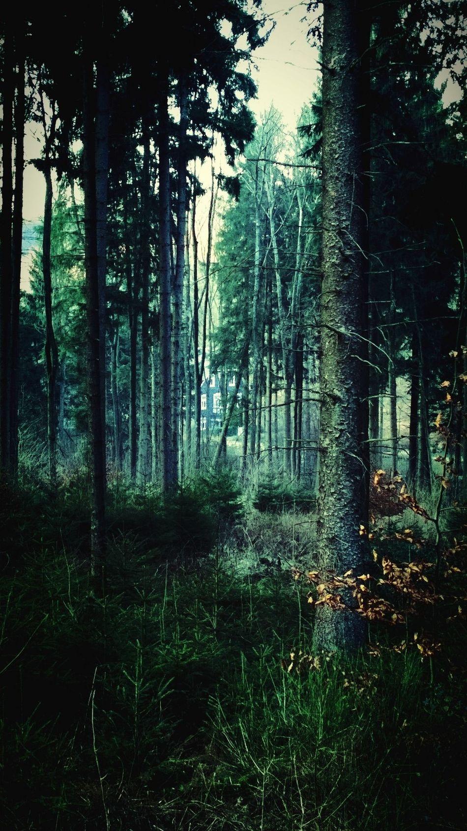 Beautiful stock photos of fairy, Abundance, Auto Post Production Filter, Beauty In Nature, Coniferous Tree