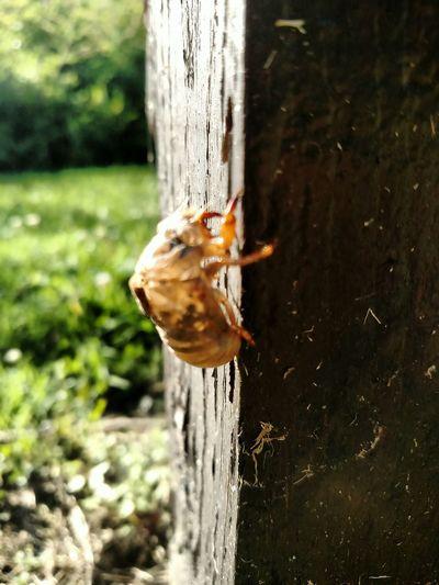 I Hate Bugs Locust Locust Shell