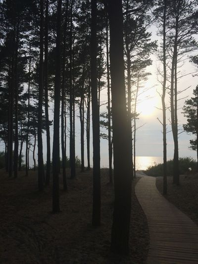 Tree Sunlight Sunset Nature Forest WoodLand Landscape Outdoors Pine Tree No People Silhouette Look Around  Passing By Enjoying Life Tree Area Lets Go Swimming Letstravel