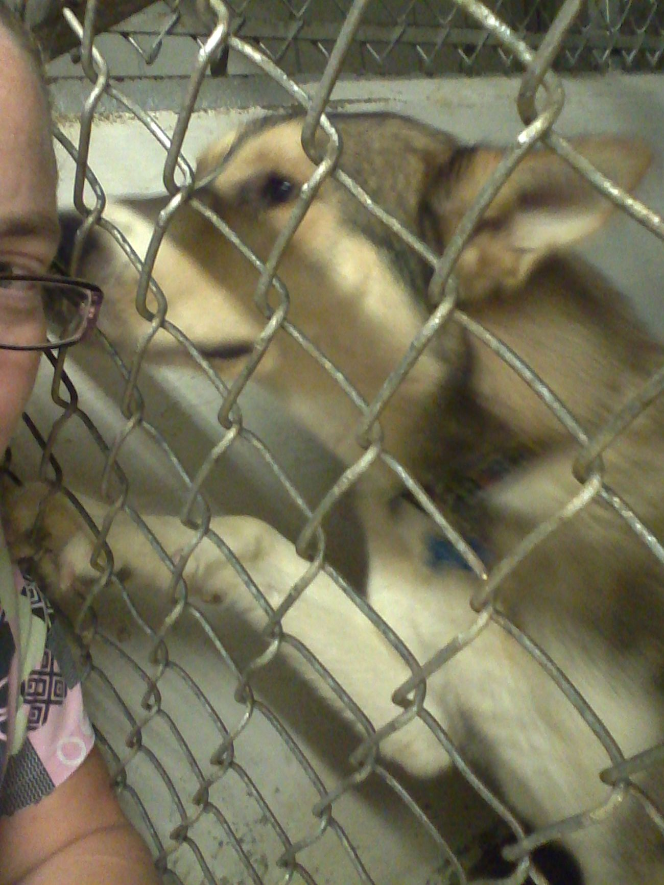 Doggy ♥ Lovemyjob Helovesmeandilovehim Kisses