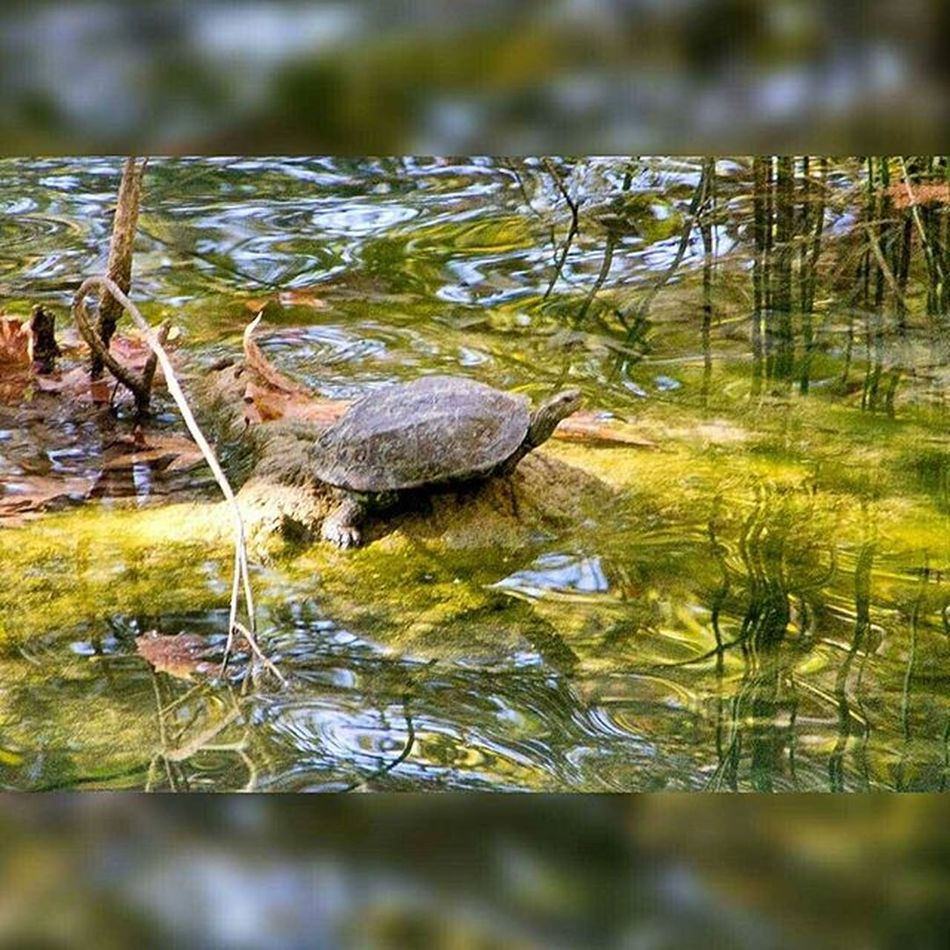 Turtle Kursunlu şelalesi Paradise Kursunluselalesi Aksu Waterfall Antalya Antalyaturkey Turkey Hotday Holiday