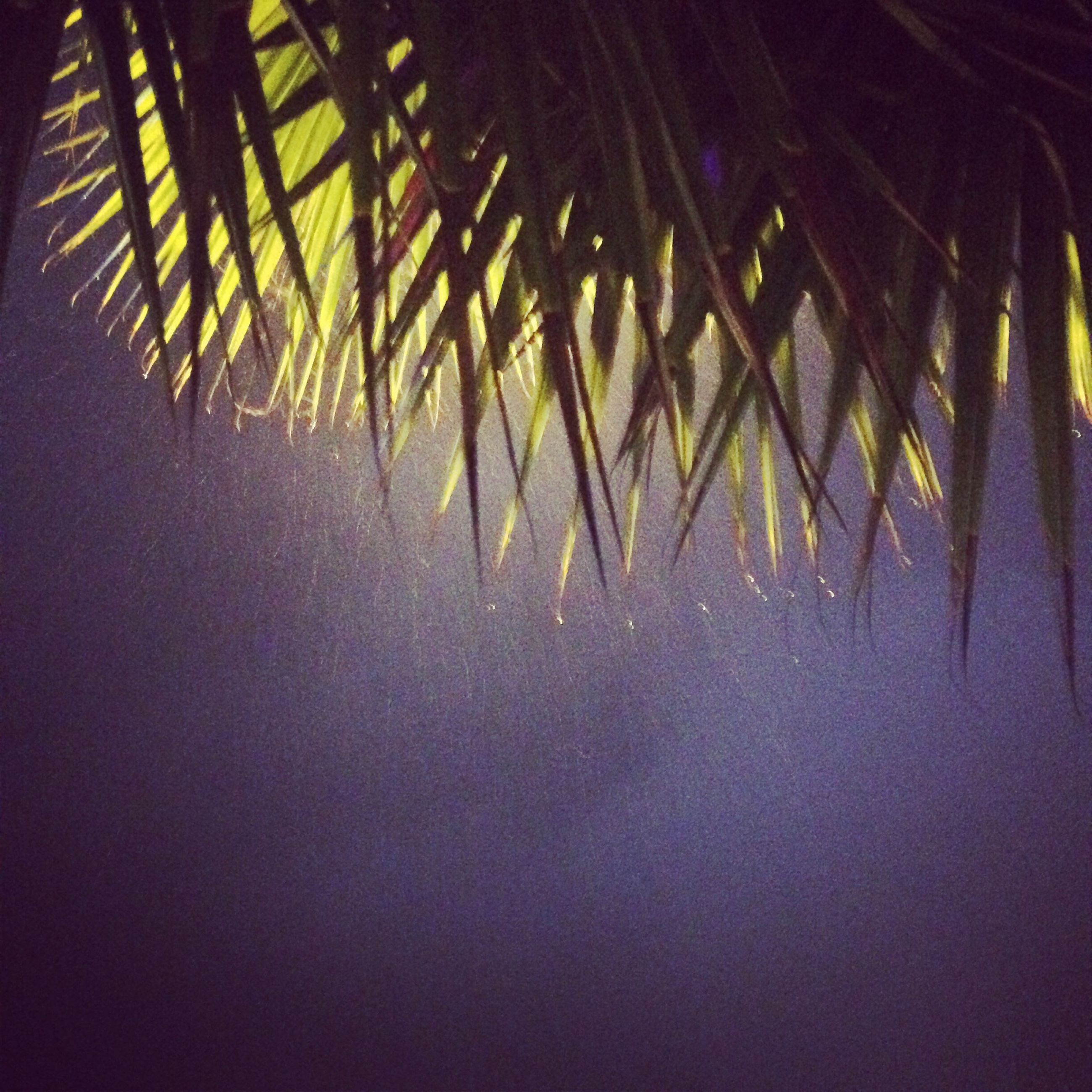 growth, nature, tranquility, plant, tree, palm tree, leaf, beauty in nature, no people, branch, outdoors, palm leaf, sunlight, day, close-up, tranquil scene, backgrounds, growing, green color, scenics