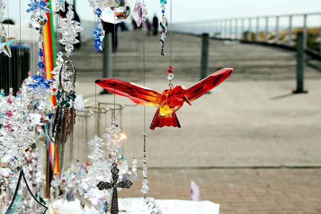 Crystal on the Beach Crystals Jetty Beach Bird