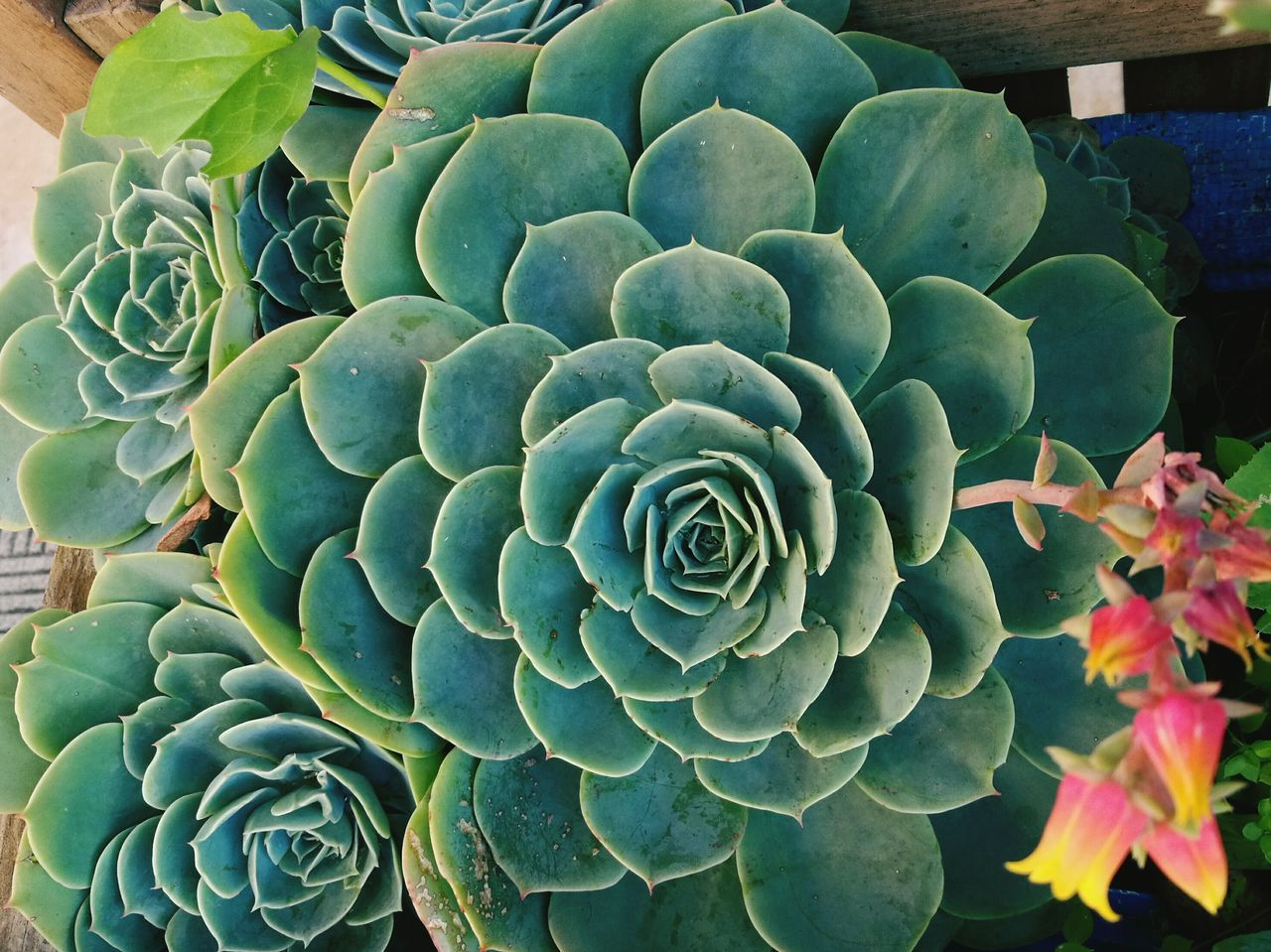 Plant Nature No People Beauty In Nature Flower Cactus Growth Leaf Grasse Crassula Fragility Close-up Outdoors Day Freshness