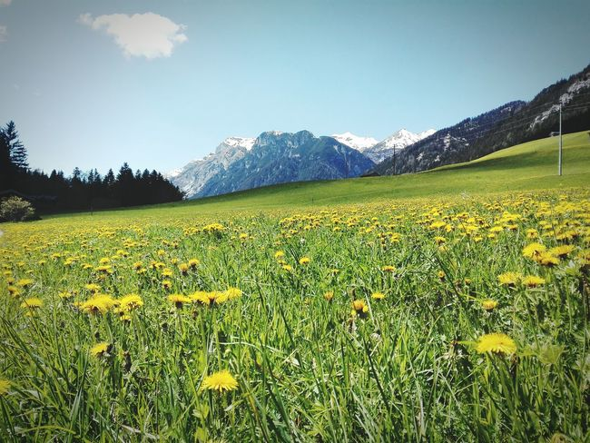 Colourmehappy Weekend Activities Alps Inthemountains Capture The Moment Holiday♡ Flowers Beauty In Nature Nature_collection Nature Photography Naturelovers Nature Is Art Feel The Journey On The Way
