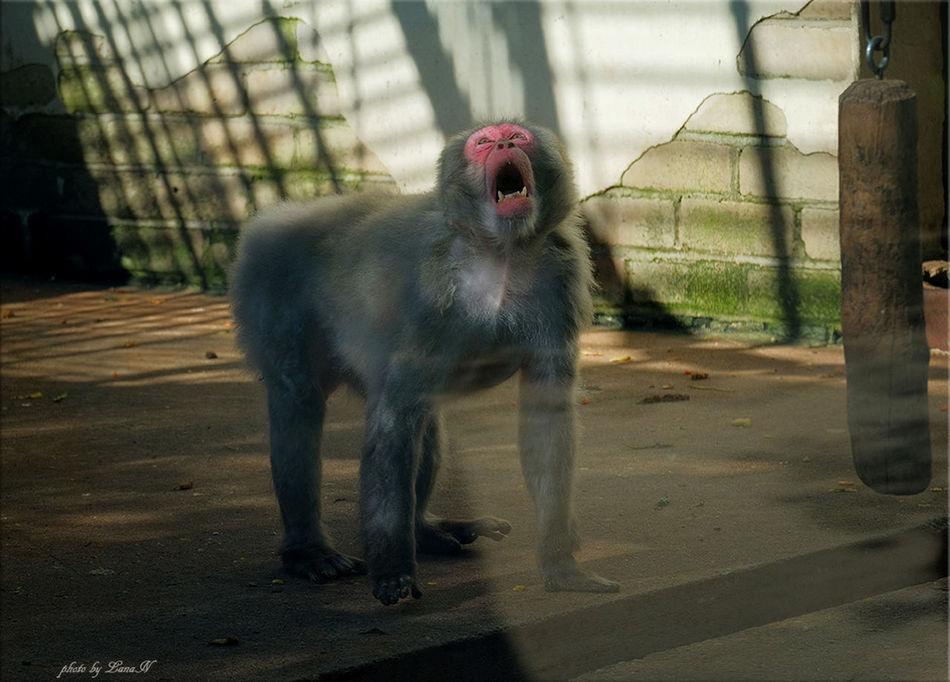 Zoo Zoo Animals  Manky