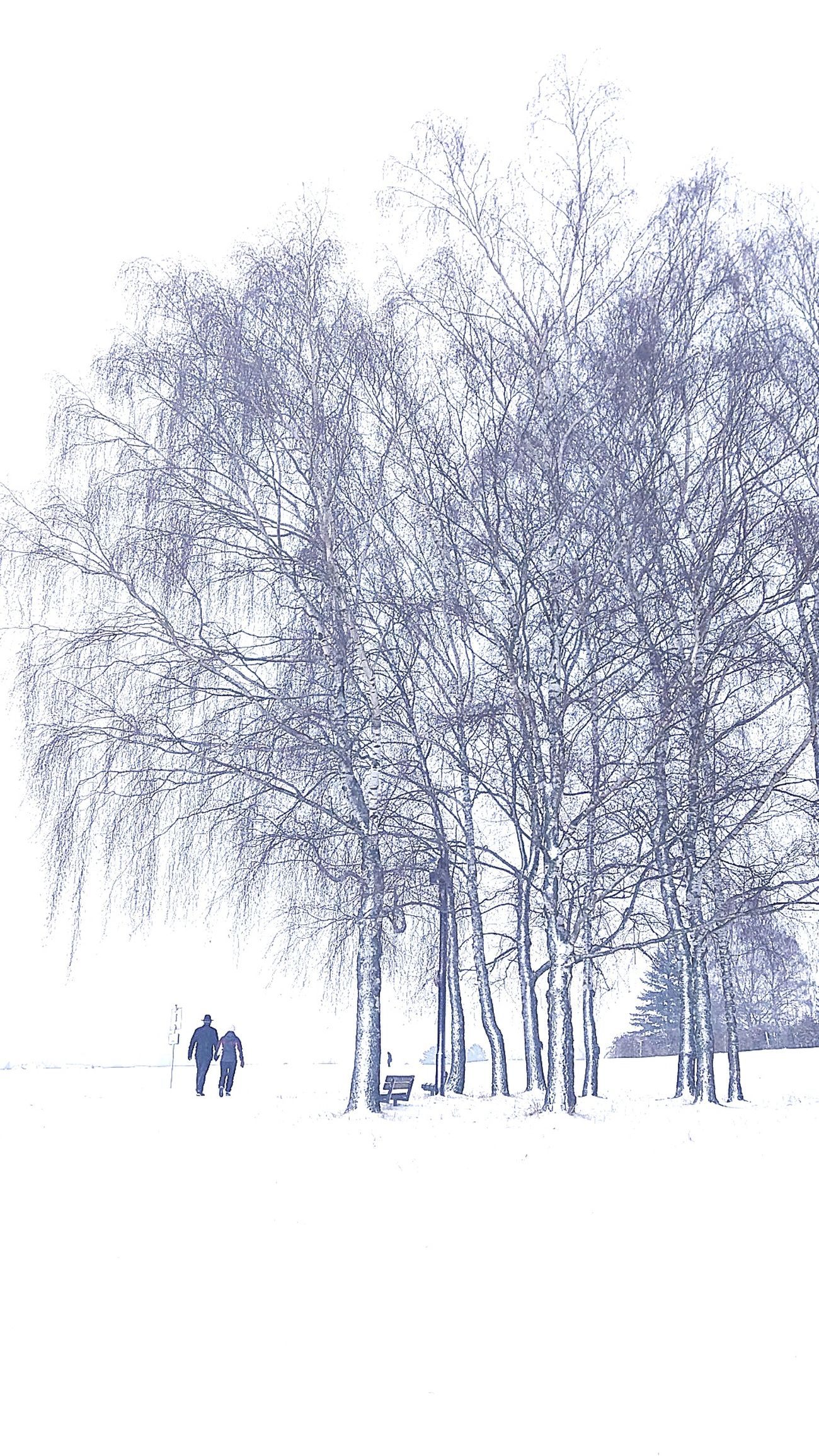 Winter Trees Winter Wonderland Walking Thru Nature