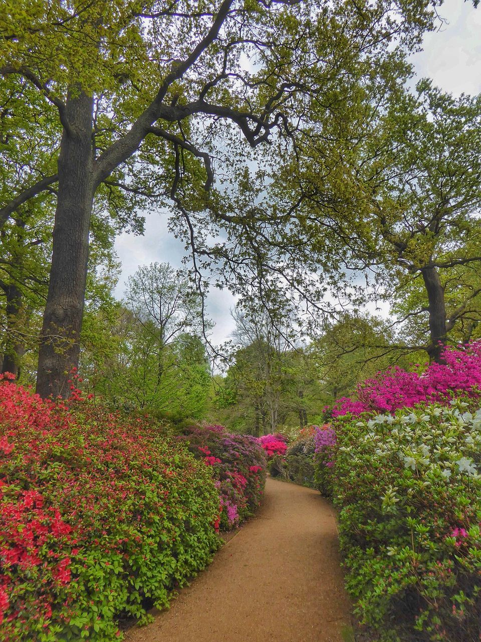 tree, growth, nature, beauty in nature, flower, the way forward, plant, tranquility, tranquil scene, scenics, green color, day, no people, outdoors, branch, walkway, sky, freshness