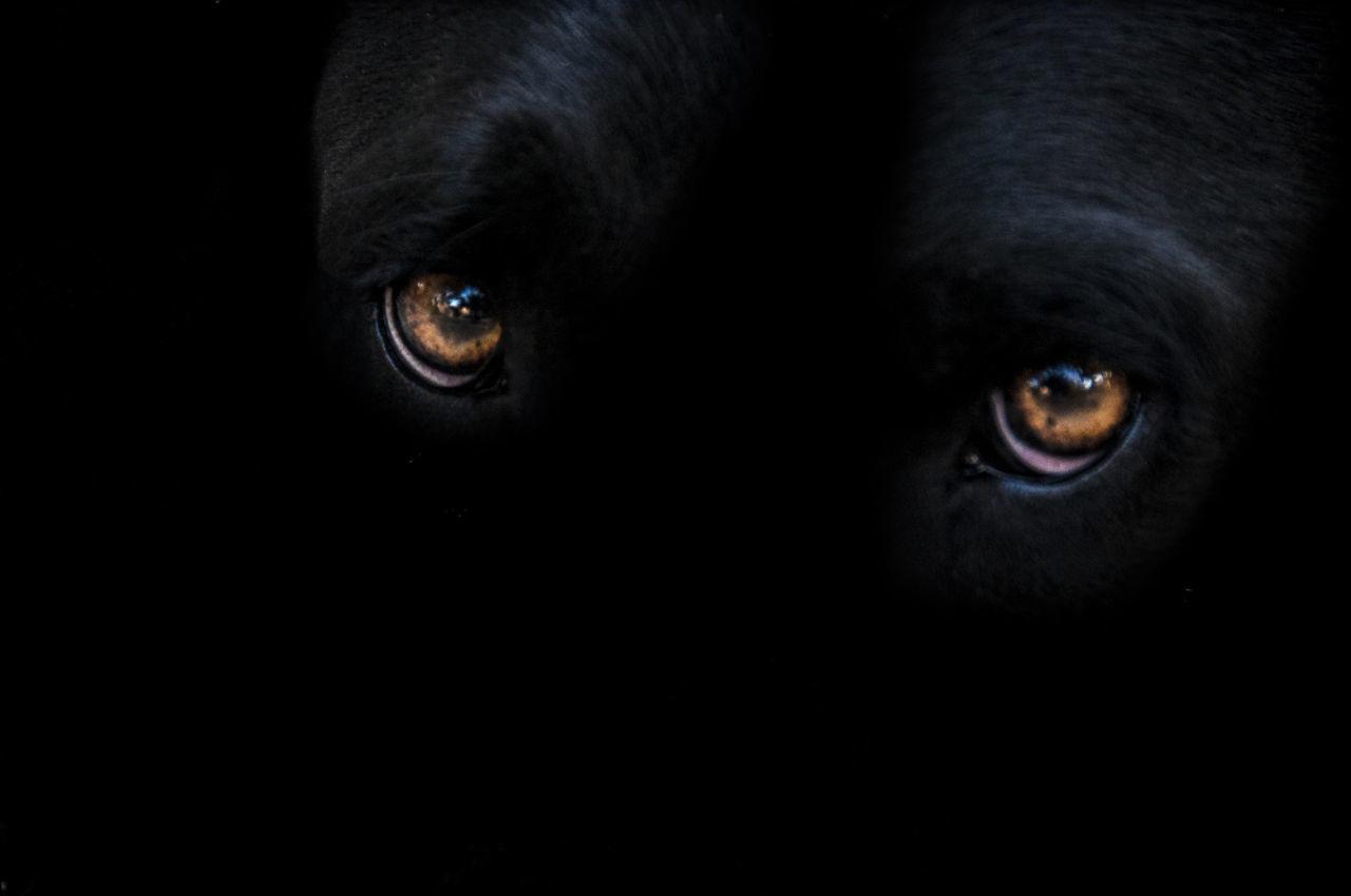 Animal Eye Black Color Dog Eyes Dog Look Dog Love Domestic Animals Eyeemphoto Animal Head  Staring Tara ♥︎