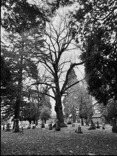 Trees Landscape Silhouette Landscapes Landscape #Nature #photography TreePorn Landscape_photography Tree Nature Scenic Abstractions In BlackandWhite Portland, OR Graveyard Beauty Graveyard Cemetery Light And Shadow Black And White Blackandwhite Black & White Blackandwhite Photography