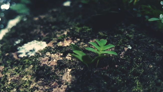 Nature Photography First Eyeem Photo