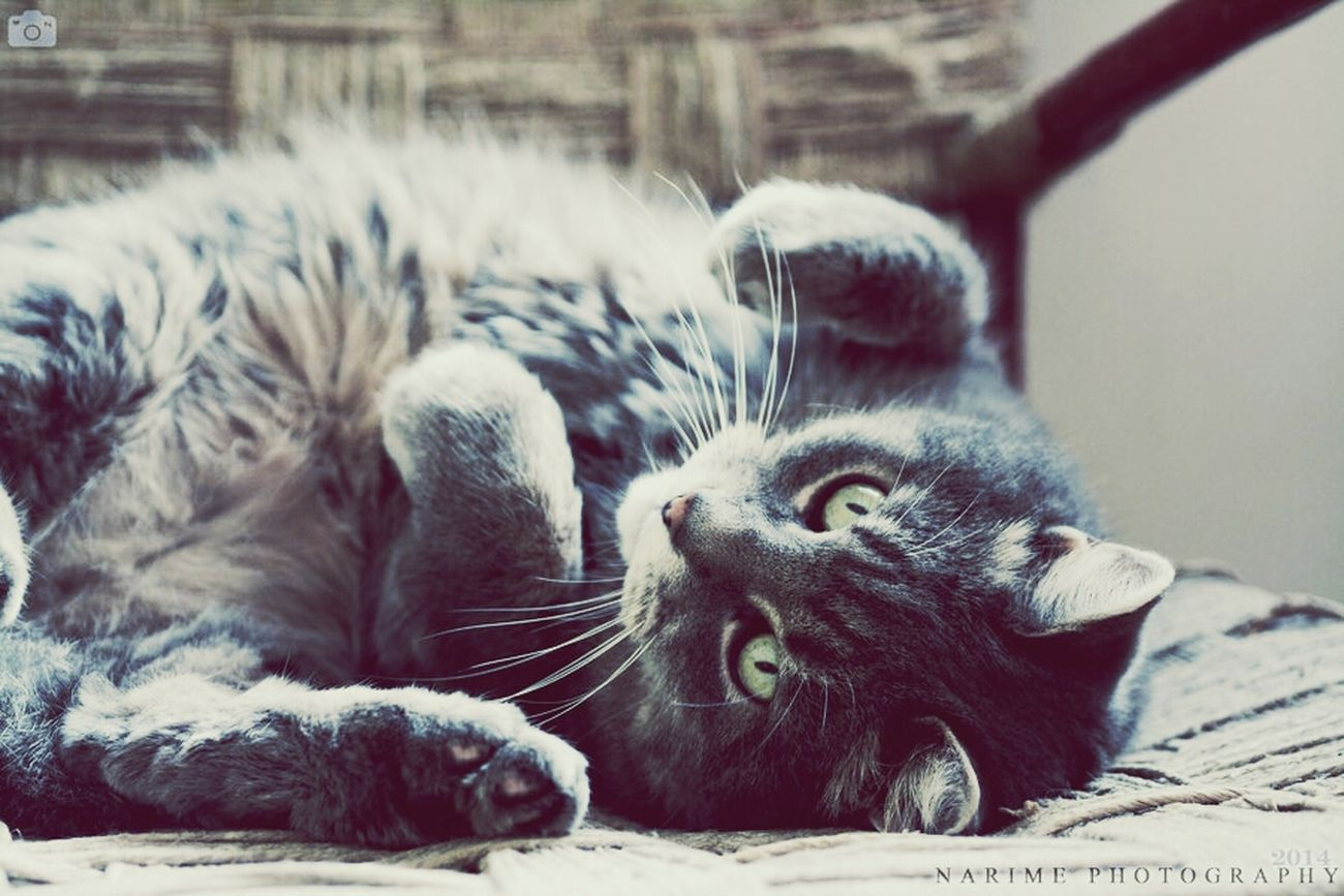 Cat Look Clara Narime