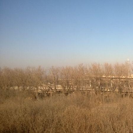 Campo Pekin Invierno