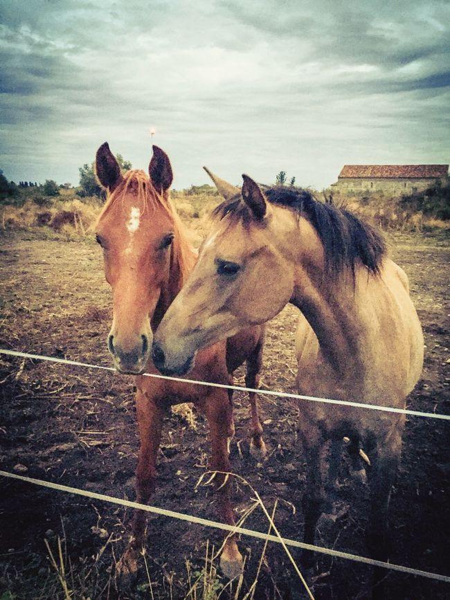 Horse Horses Nature Igercorse Lucciana Les Chevaux ❤️