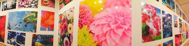 蜷川実花 Japan 花 Flowers IPhoneography Pink Flower Pink Color Pink