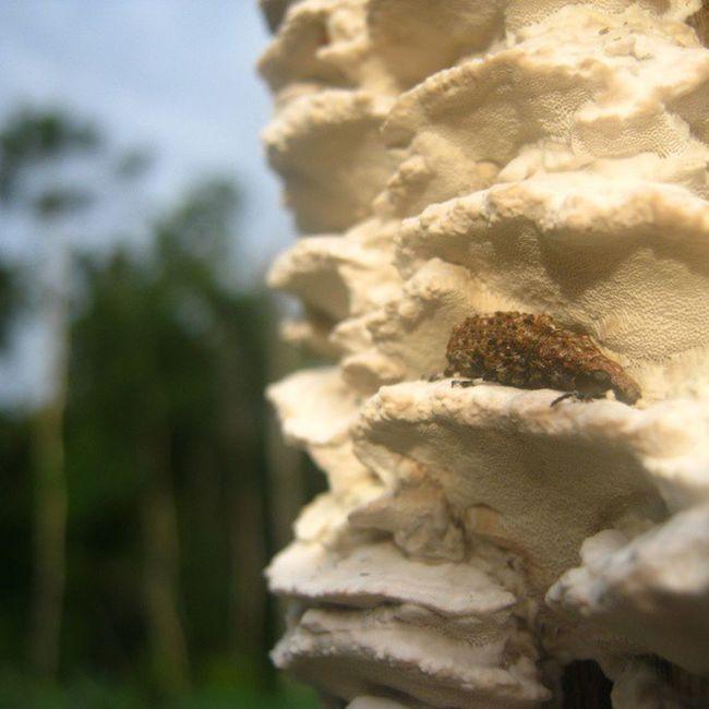 [ mungkin ini serangga ? ] Instaanimal Animal Waykanan Lampung indonesia asia nature instanature instanusantaranature