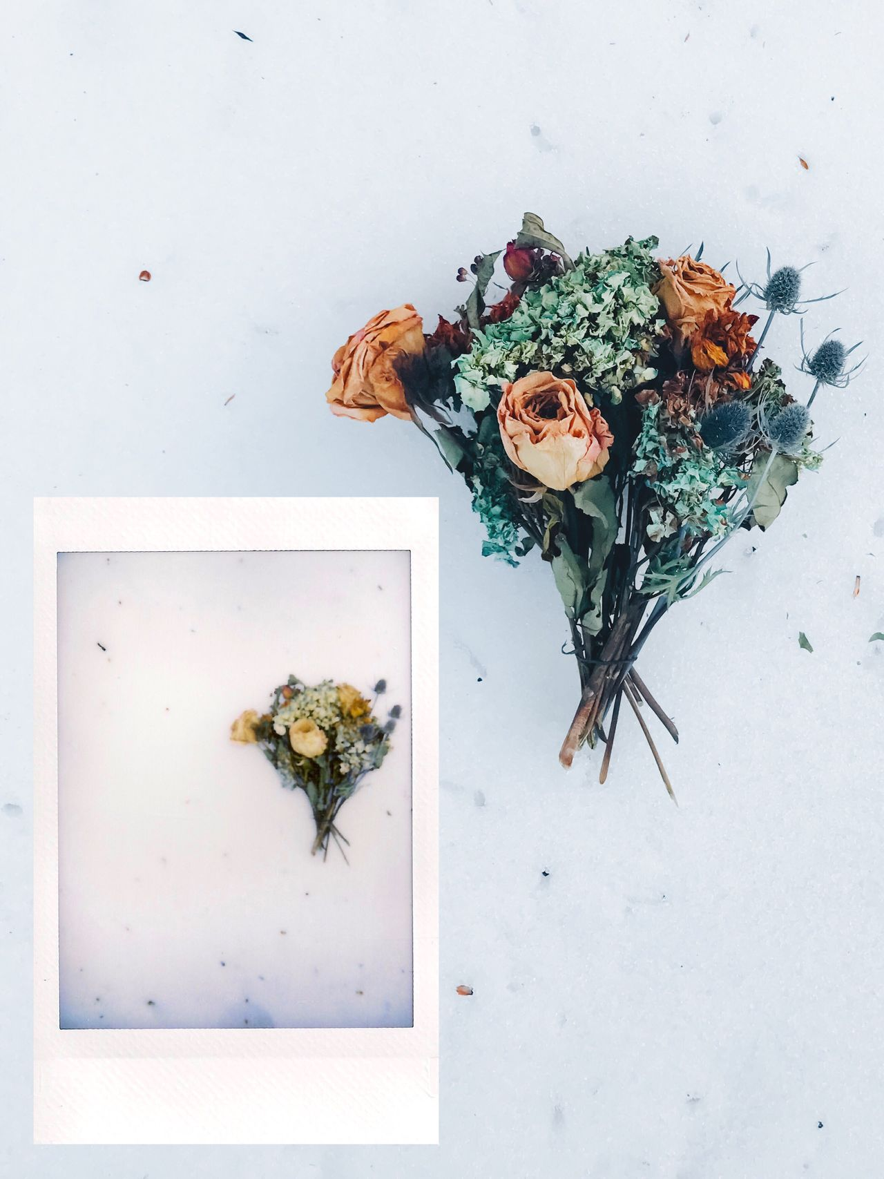 Instant Photo a Day flower fragility Freshness no people leaf white background Nature indoors close-up beauty in Nature day Instant photography Film film photography