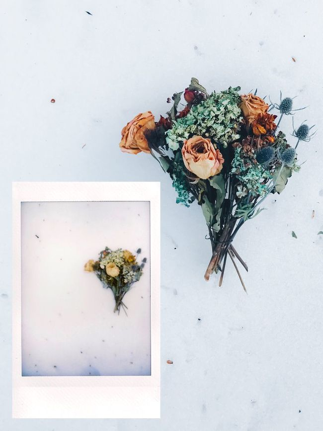 Instant Photo A Day Flower Fragility Freshness No People Leaf White Background Nature Indoors  Close-up Beauty In Nature Day Instant Photography Film Film Photography Cut And Paste Fresh On Market 2017