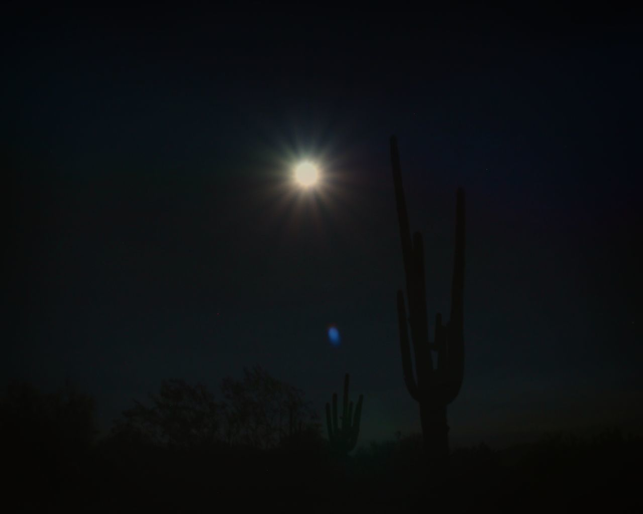 When the moon hits your eye... Arizona Arizona Nights Arizona Sky Beauty In Nature Cactus Cactus Moon Dark Desert Desert Moon Glowing Majestic Moon Shots Moonlight Nature Night Night Cactus Night Picture Nightphotography Saguaro Saguaro And Moon Scottsdale Sky Tranquil Scene Tranquility