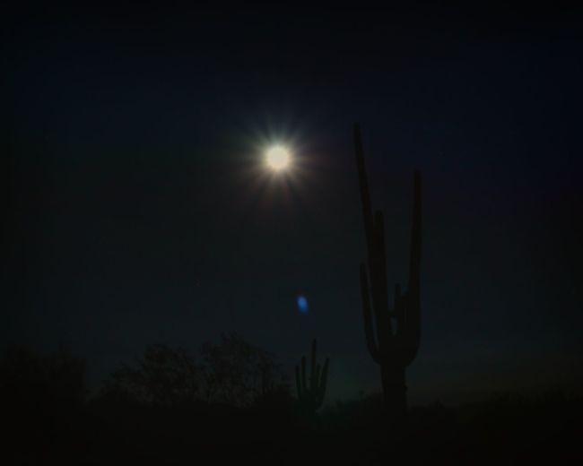 When the moon hits your eye... Arizona Arizona Nights Arizona Sky Beauty In Nature Cactus Cactus Moon Dark Desert Desert Moon Glowing Majestic Moon Shots Moonlight Nature Night Night Cactus Night Picture Nightphotography Saguaro Saguaro And Moon Scottsdale Sky Tranquil Scene Tranquility