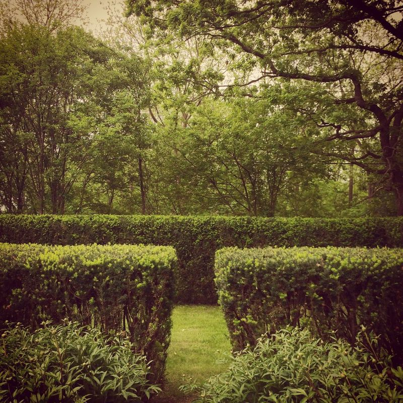 Fresh trim Hedge Garden Backyard English Garden Oldgarden Iphoneonly