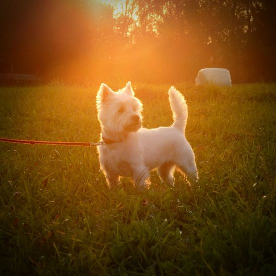 Dog Animals Sunset Sweet Sunset_collection Sunmmer Sun Nice Nikon Photo