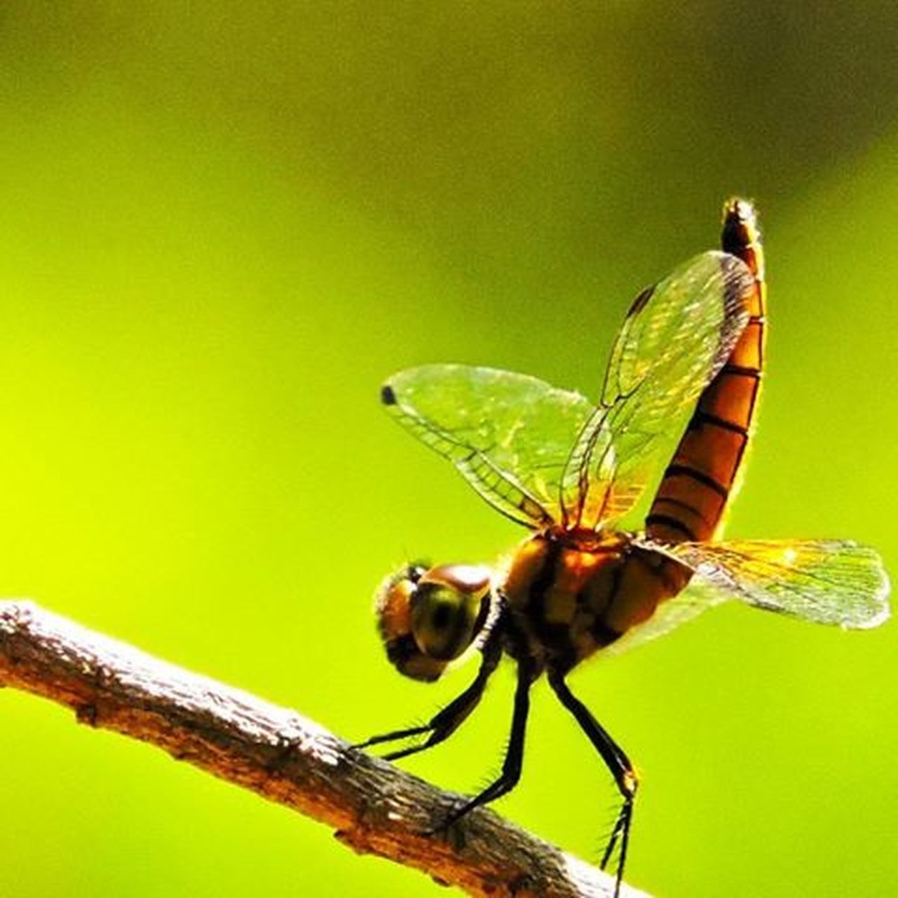 Macro mode F / 5.6 1/400 350mm Iso 800 Photography Nikon MyClick Dragonfly Green Happy Instalove Instamood Instagraphy Instagram PhotographyLove Kottayam .