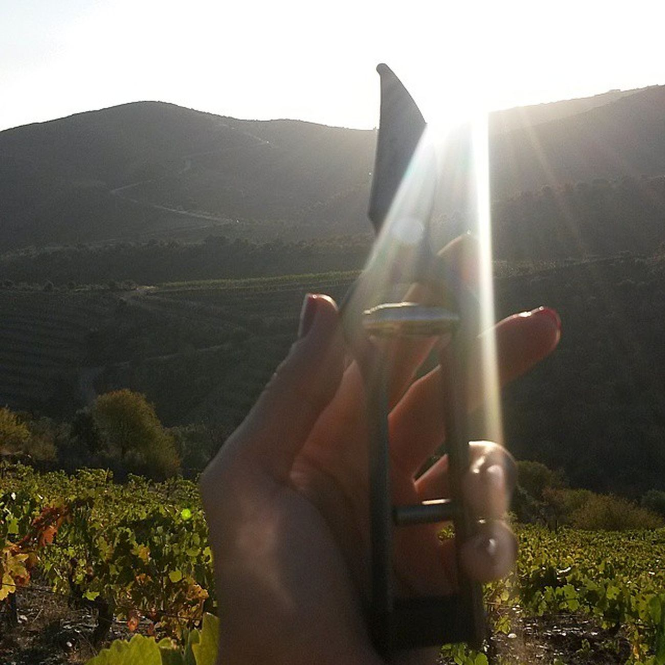 Nofilter Good Morning World, from Douro! AltoDouroVinhateiro Vindimas2014 Vineyards  Bucketlist