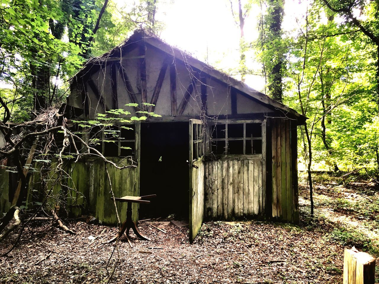The House In The Woods Shack Derelict Woods Bleack Built Structure Building Exterior House Old Forest Messy Discarded Outdoors Cottage Rural Scene Tranquility Wooden House