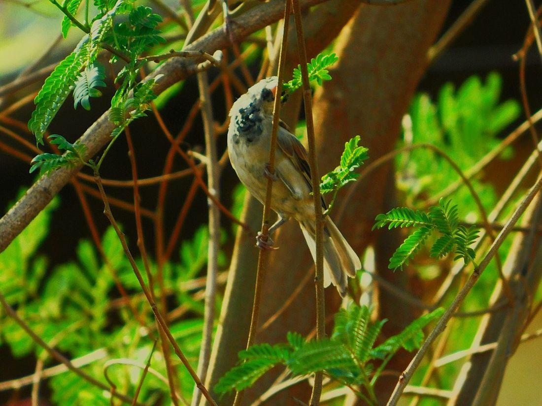 Sparrow First Eyeem Photo The Great Outdoors - 2017 EyeEm Awards Bird Photography Birds Of EyeEm  Sparrow Awesome Bird