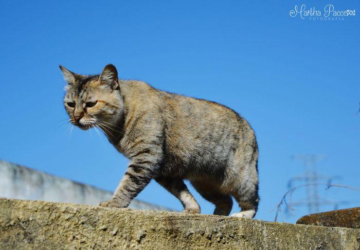 O caminhar sem destino! Gatos Gatosfelizes Paranapiacaba Olharfotografico Passeio Amigavél Cats First Eyeem Photo