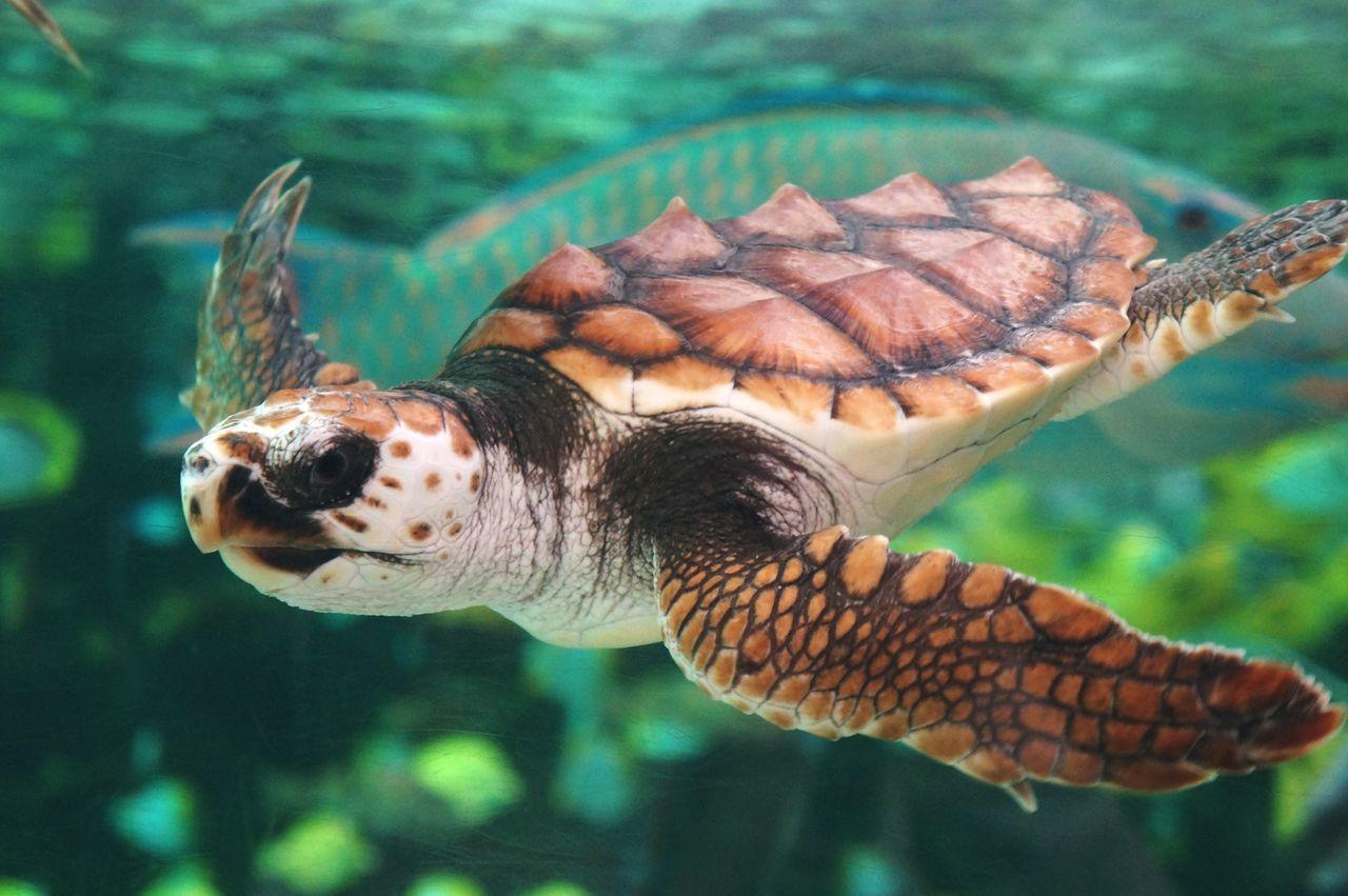 Beautiful stock photos of schildkröte, Animal Themes, Animal Wildlife, Animals In The Wild, Focus On Foreground