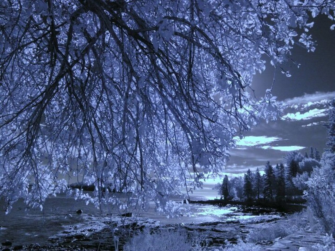 tree, winter, snow, nature, cold temperature, beauty in nature, tranquility, tranquil scene, scenics, no people, outdoors, ice, branch, frozen, sky, landscape, water, day
