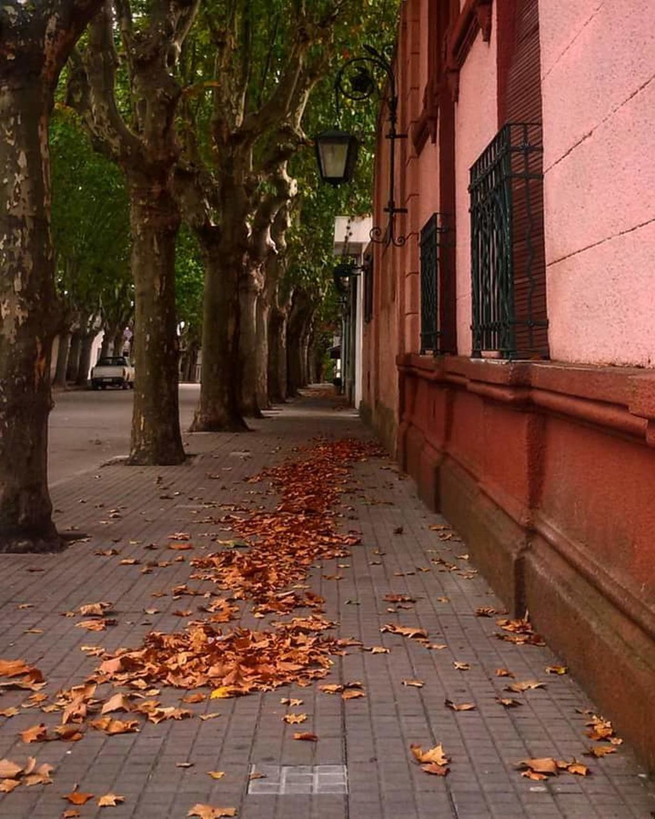 The Great Outdoors With Adobe The Great Outdoors - 2017 EyeEm AwardsLeaf Autumn Colors Autumn Leeves Architecture Colors Of Autumn Change Outdoors Street Tree Building Exterior No People Day Built Structure Nature City The Street Photographer - 2017 EyeEm Awards