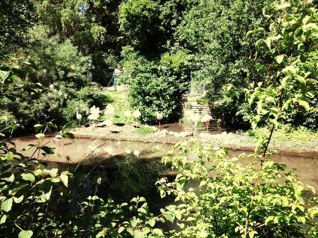 Beatiful Nature Relaxing Natural Nature Flamant Rose Eau Tree Natural Beauty Beautiful Arbre♥