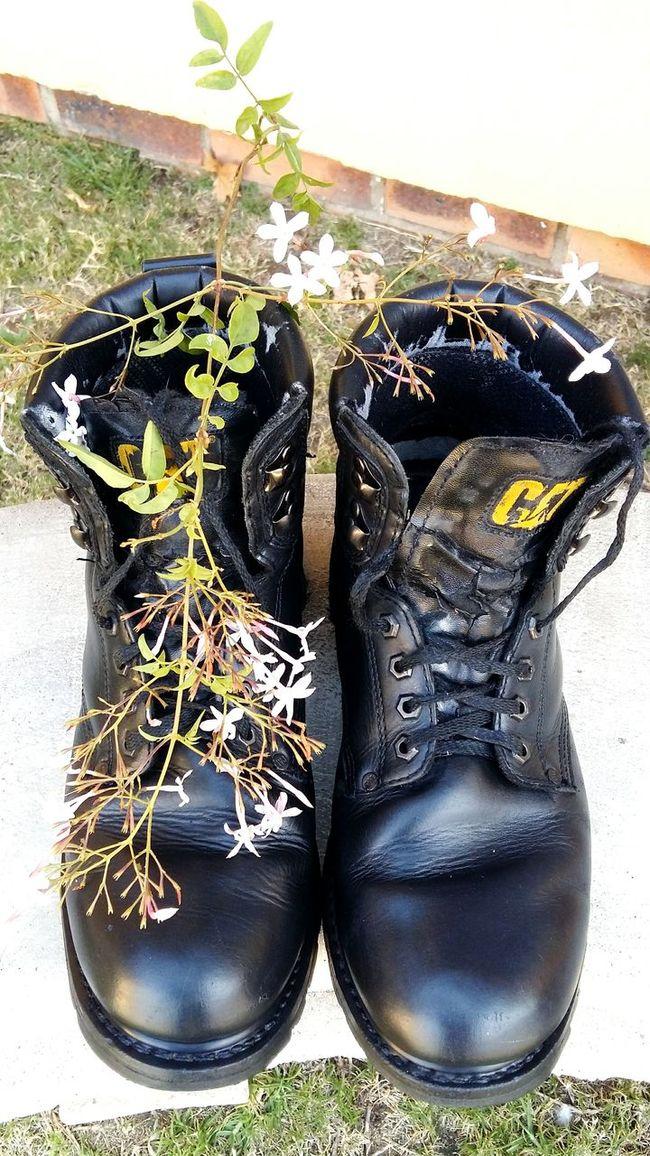 Black Cat Boots Well Worn Boots Jasmine Flower A Bird's Eye View A Bird's Eye View