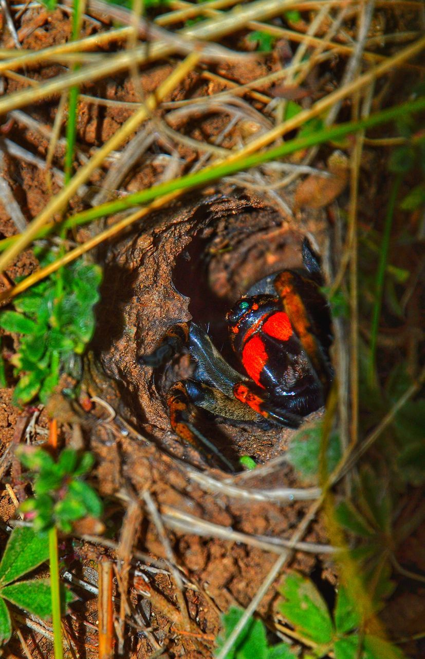 animal themes, one animal, animals in the wild, insect, no people, ladybug, nature, day, outdoors, close-up, leaf, tiny