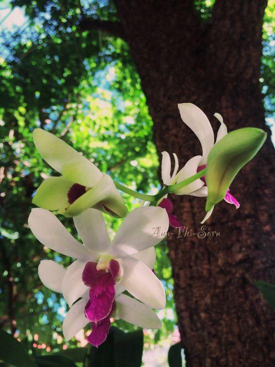 The First Fower Beautiful Fower Fower Fowers Orchid EyeEm Flower