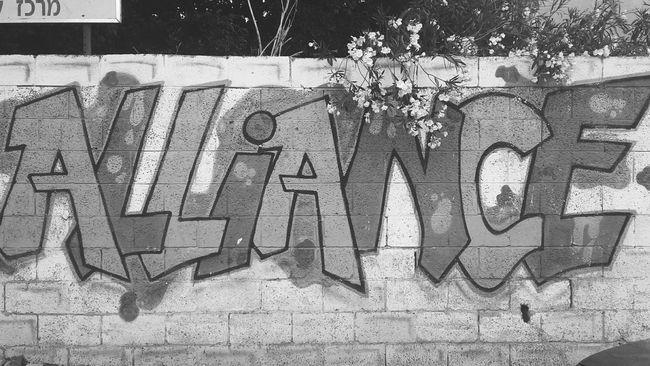 Alliance White&Black
