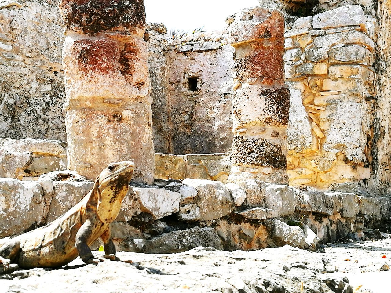 Mexico Cancun Tulum , Rivera Maya. Architecture Mayan Ruins Iguana Wildlife Ancient Architecture Outdoors No People EyeEm Selects