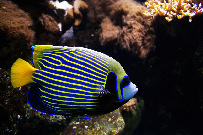 Animal Markings Animal Themes Aquarium Beauty In Nature Berlin Aquarium Blue Fish One Animal Rock Rock Formation Sea Sea Life Swimming UnderSea Underwater Water Wildlife Zoology