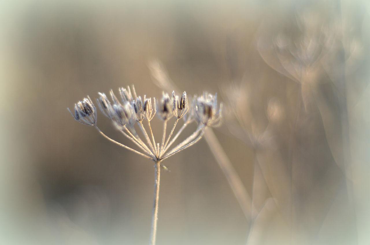 Close-Up Of Frozen Flower Buds