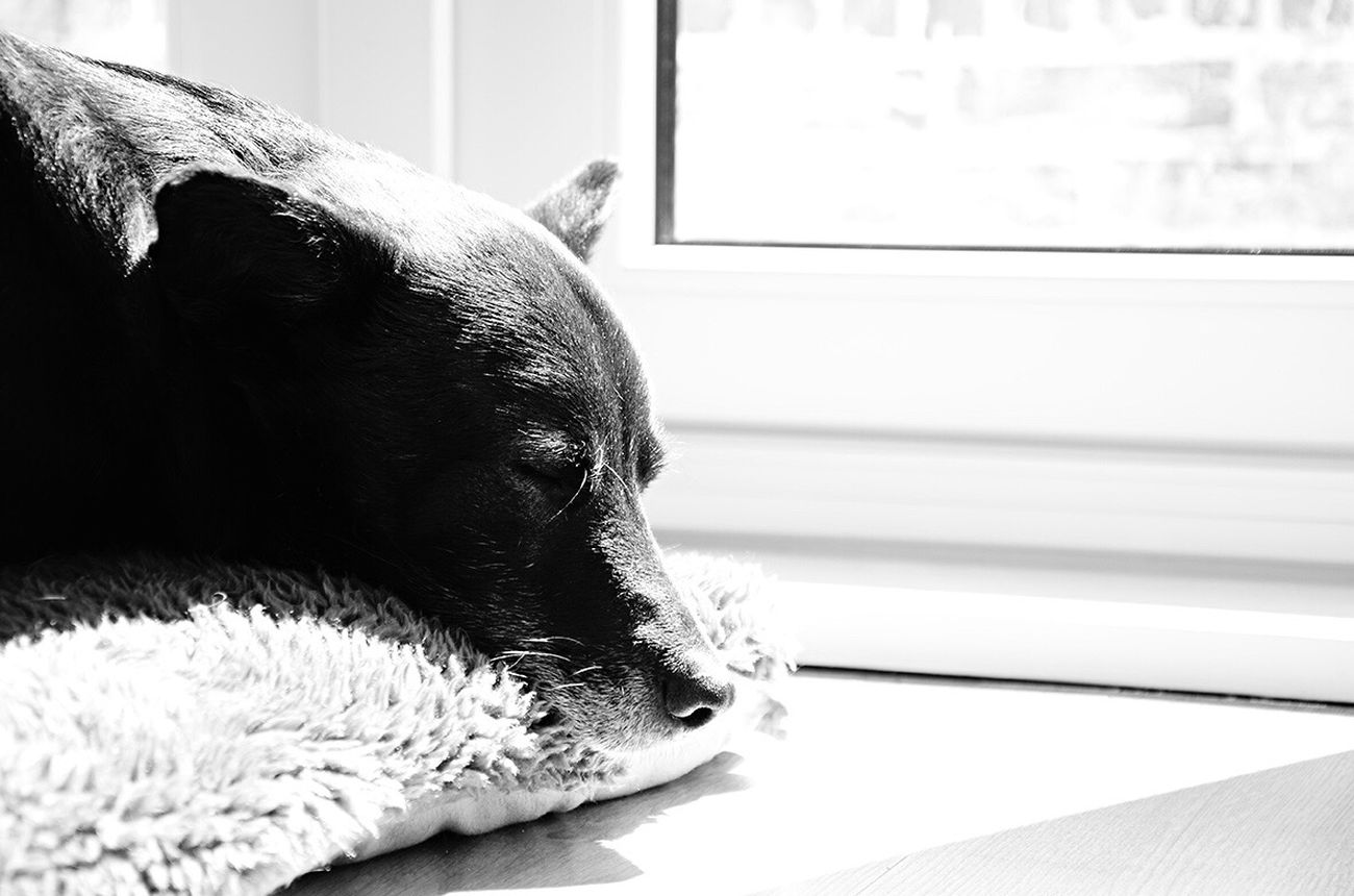 Just good dreams. Johnny enjoying sleeping in the sun. Dogs Life Sleeping Dreaming Black & White Nikon D7000 Dogs Of EyeEm Pets