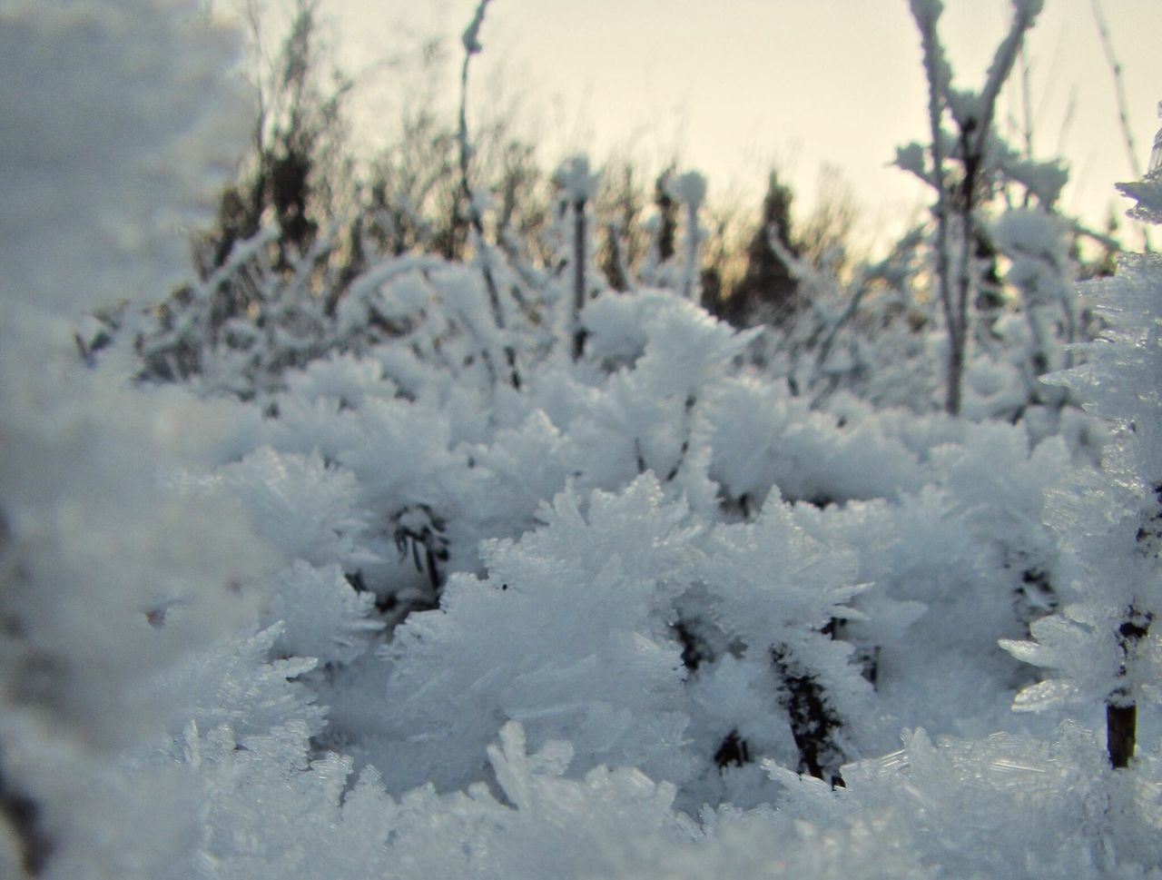 winter, cold temperature, snow, nature, white color, outdoors, weather, day, tree, no people, field, growth, focus on foreground, beauty in nature, plant, close-up, fragility, sky