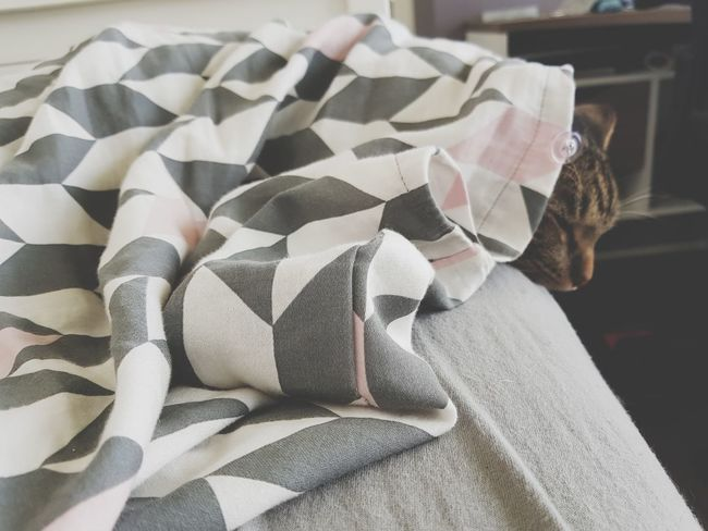 Babyboy Sleeping Cat Textile No People Indoors  Close-up Day Animallove