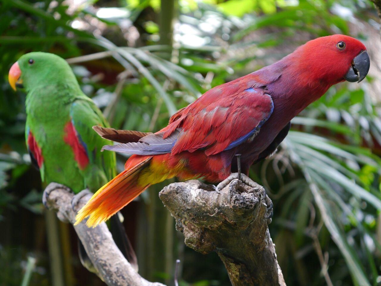 Beautiful stock photos of parrot, Animal, Animal Themes, Animals In The Wild, Avian