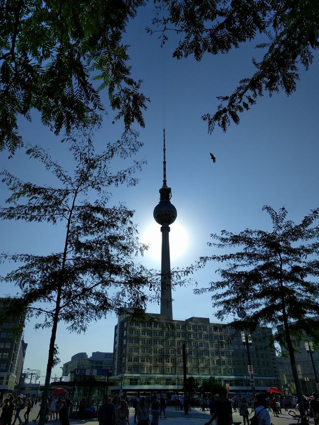 Love that pic! Tower Communications Tower Tall - High Architecture City Built Structure Tree Travel Destinations Spire  Building Exterior Tourism Low Angle View Travel International Landmark Famous Place Capital Cities  Clear Sky Communication Sky Fernsehturm Growth Against The Sun Bird Urban Urban Landscape