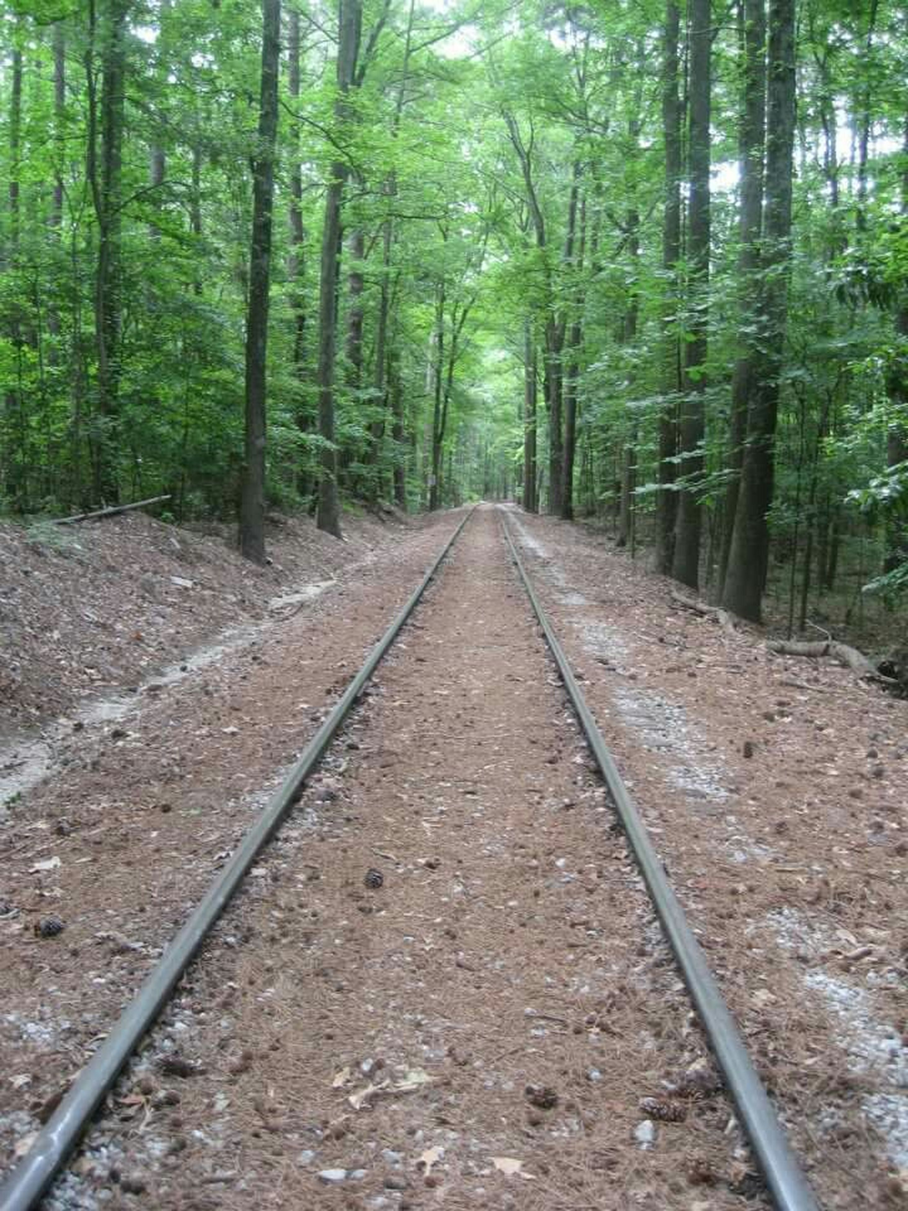 tree, the way forward, forest, diminishing perspective, transportation, vanishing point, railroad track, tranquility, nature, tranquil scene, growth, rail transportation, woodland, day, non-urban scene, tree trunk, beauty in nature, outdoors, no people, landscape